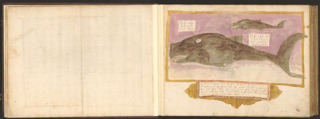 whale-book-coenensz-adriaen-p14.jpg