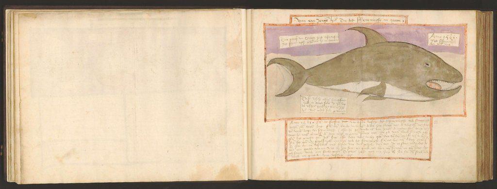 whale-book-coenensz-adriaen-p28.jpg